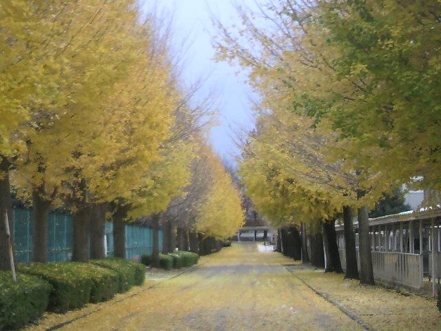 近所の冬景色